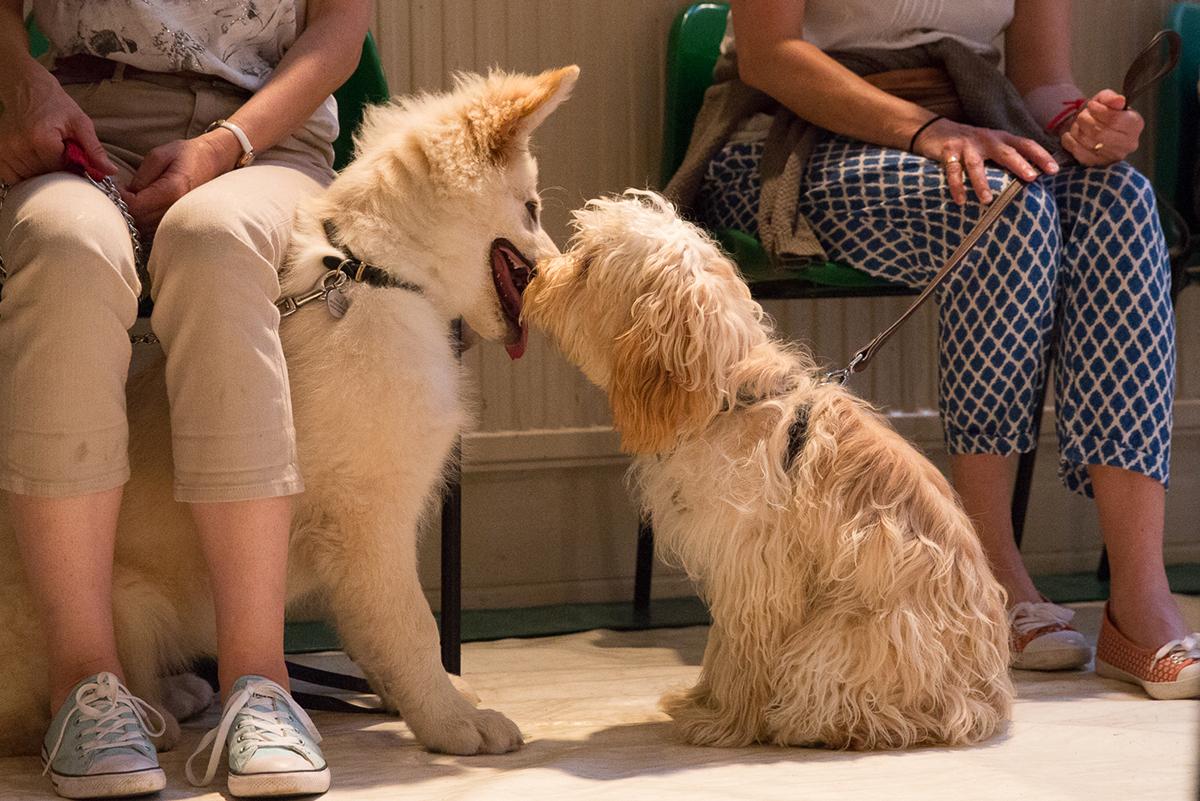 puppy-lifeskills-course